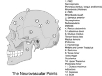points neurovasculaires
